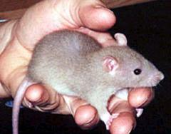 Curing fear and disgust of rats is easy with METs!